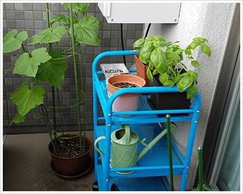 01. ベランダで家庭菜園